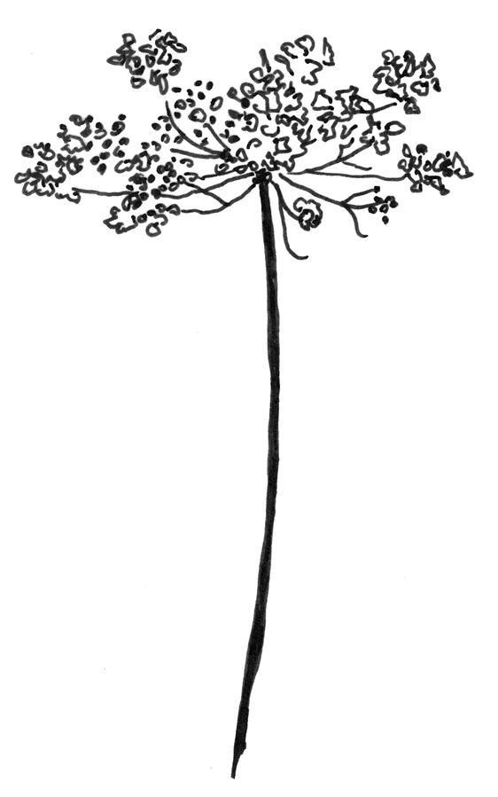 Mein Laden, Anna Strohmeier Wango – Blumen & Shop